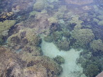 Coral reef. In the water in Tahiti royalty free stock image