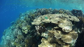 Coral Reef in Wayag, Raja Ampat stock footage