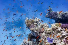 Coral Reef With Soft And Hard Corals On The Bottom Of Red Sea Stock Photography