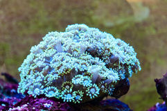 Coral reefs Stock Photography