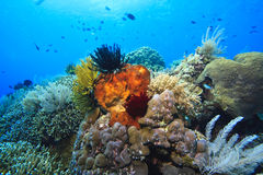 Coral reefs. Off the island of Bunaken in North Sulawesi Indonesia Stock Images