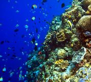 Coral reefs Royalty Free Stock Photography