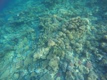 Coral reefs colors Royalty Free Stock Photography