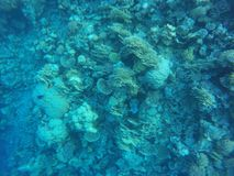 Coral reefs Royalty Free Stock Images