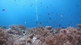 Coral Reefs en la isla de Layang-layang almacen de metraje de vídeo