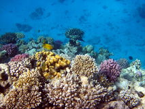 Coral reefs and fish Royalty Free Stock Photography