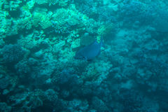 Coral reefs and fish in the red sea Stock Photography