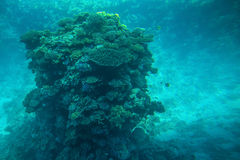 Coral reefs and fish in the red sea Stock Image