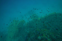 Coral reefs and fish in the red sea Royalty Free Stock Photos