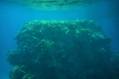 Coral reefs and fish in the red sea Stock Images