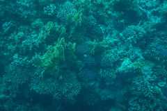 Coral reefs and fish in the red sea Royalty Free Stock Image