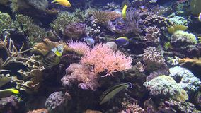 Coral Reefs, Fish, Sea Life, Underwater Stock Photo