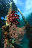 Coral reefs and fishes stock images