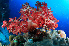 Coral reefs and fishes royalty free stock image