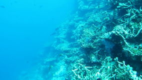 Coral reefs in Maldives stock video footage