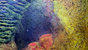 Coral reefs and marine life in cartoon form. Coral reefs and marine life under the water in cartoon form stock footage