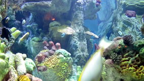 Coral reefs and marine life and fish. Under the water stock footage