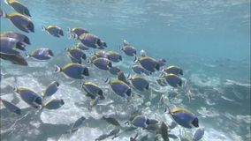 Coral reefs and marine life. Indian Ocean video. Action camera stock video footage