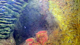 Coral reefs and marine life. Under the water stock footage