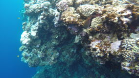 Coral reefs near the Blue Hole. Blue Hole is a diving location on east Sinai, a few kilometres north of Dahab, Egypt on the coast of the Red Sea stock video footage