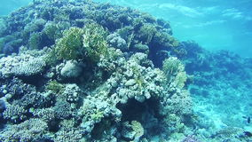 Coral Reefs in the Red Sea stock video footage