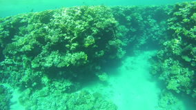 Coral Reefs in the Red Sea, Egypt. Coral Reefs in the Red Sea. Beautiful Colorful Tropical Fish on Vibrant Coral Reefs Underwater in the Red Sea. Egypt. Sealife stock footage