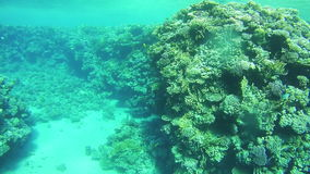 Coral Reefs in the Red Sea, Egypt stock video footage