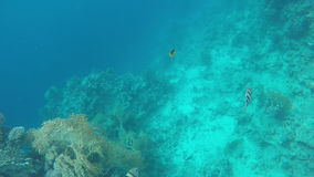 Coral reefs of the Red Sea. Slow-motion shooting of 120 fps stock video