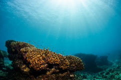 Coral reefs from the sea of cortez, Mexico Royalty Free Stock Photo