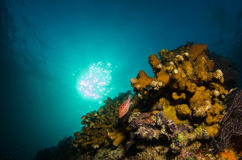 Coral reefs from the sea of cortez, Mexico Royalty Free Stock Photography