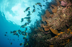 Coral reefs from the sea of cortez, Mexico stock photography
