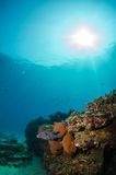 Coral reefs from the sea of cortez, Mexico Stock Image