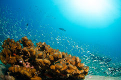 Coral reefs from the sea of cortez, Mexico Royalty Free Stock Photos