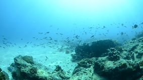 Coral reefs from the sea of cortez, Mexico stock video footage