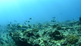 Coral reefs from the sea of cortez, Mexico stock video