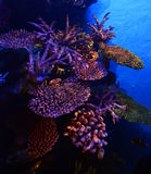 Coral reefs Sea life Stock Photo