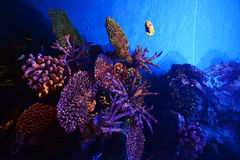 Coral reefs Sea life Stock Images