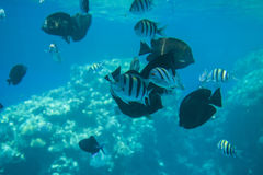 From the coral reefs at sharm el sheikh Stock Photos