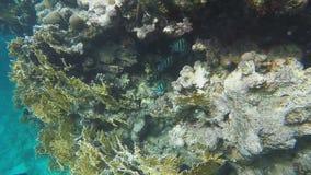 Coral reefs. Slow motion. Coral reefs. Underwater world Coral reefs. Slow motion 120 fps stock video footage