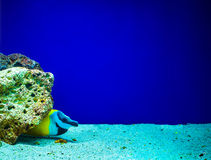 Coral reefs Royalty Free Stock Photos