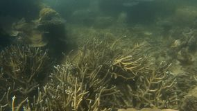 Coral reefs underwater with groups of fish. A close up shot of coral reefs underwater with fish stock video footage