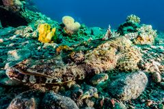 Coral reefs and water plants in the Red Sea stock photography