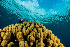 Coral reefs and water plants in the Red Sea, colorful and different colors stock photography