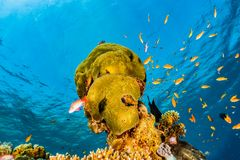 Coral reefs and water plants in the Red Sea, colorful and different colors royalty free stock images