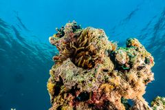 Coral reefs and water plants in the Red Sea, colorful and different colors royalty free stock image