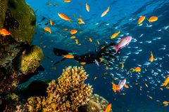 Coral reefs and water plants in the Red Sea, colorful and different colors stock image