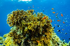Coral reefs and water plants in the Red Sea stock photos