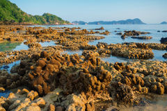coral rock around beach during ebb tide and morning light time w Royalty Free Stock Photography
