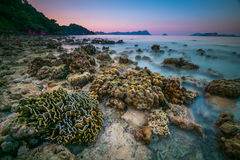 coral rock around beach during ebb tide and sunset time wide sho Royalty Free Stock Images