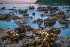 Coral rock around beach during ebb tide and sunset time wide shot background. At Nyaung Oo Phee, Myanmar stock image